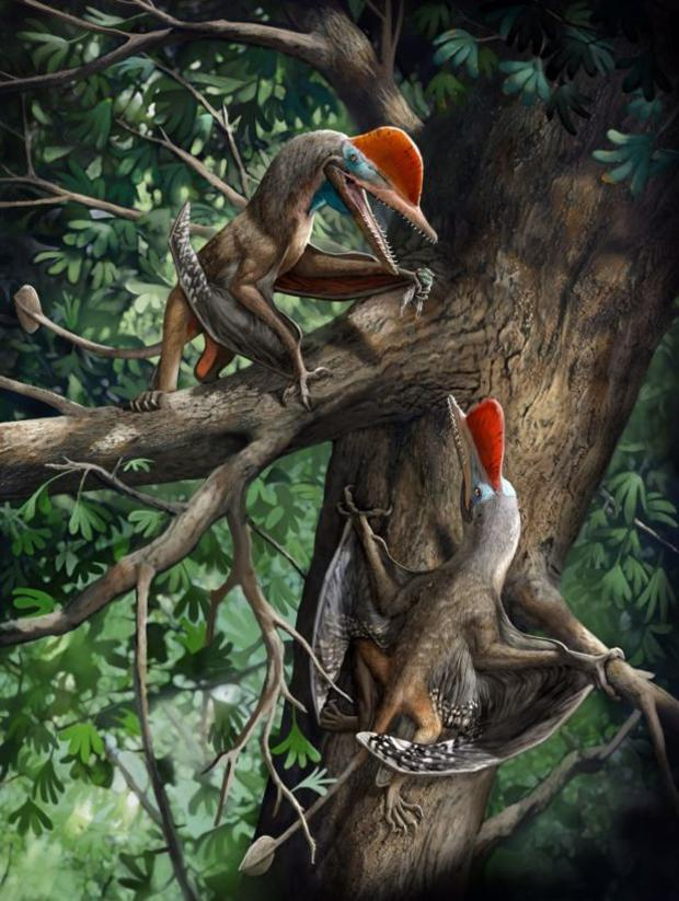 monkeydactyl-720.jpg