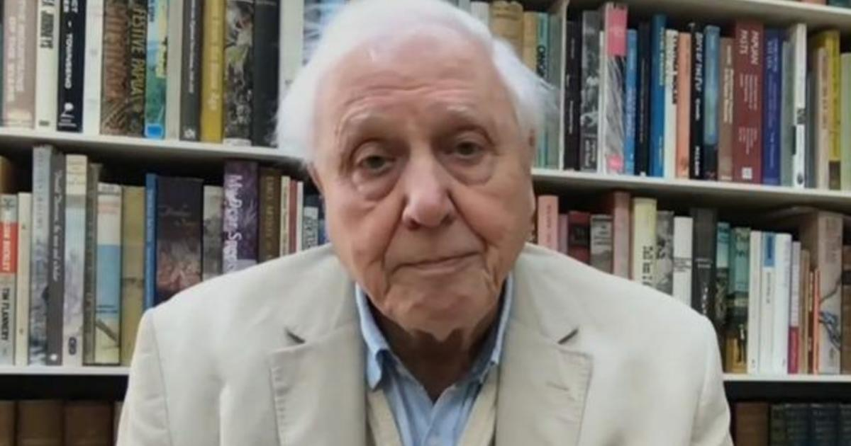 """Sir David Attenborough's """"The Year Earth Changed"""" explores nature's rebound amid COVID lockdowns"""