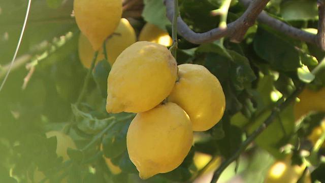 lemons-a-1280.jpg