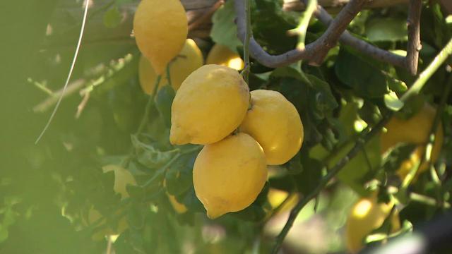 lemons-695560-640x360.jpg