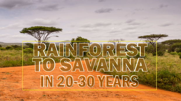 rainforest-to-savanna-in-20-years.png