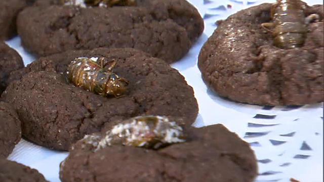 cicada-cookies-1280.jpg