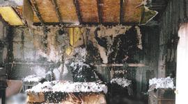 Inside the disturbing Pettit murder case