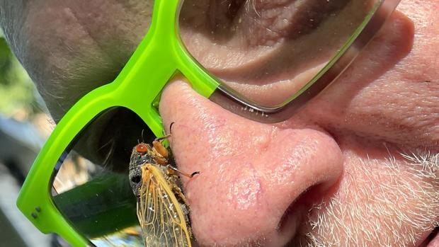 Brood X cicadas emerge after 17 years to swarm the Northeast (Warning: Graphic images)