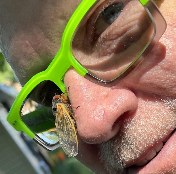 Brood x cicada Baltimore