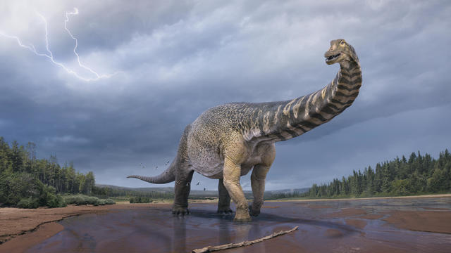 australotitan-cooperensis-vladkonstantinov-scotthocknull-ceromanganaturalhistorymuseum-hires.jpg