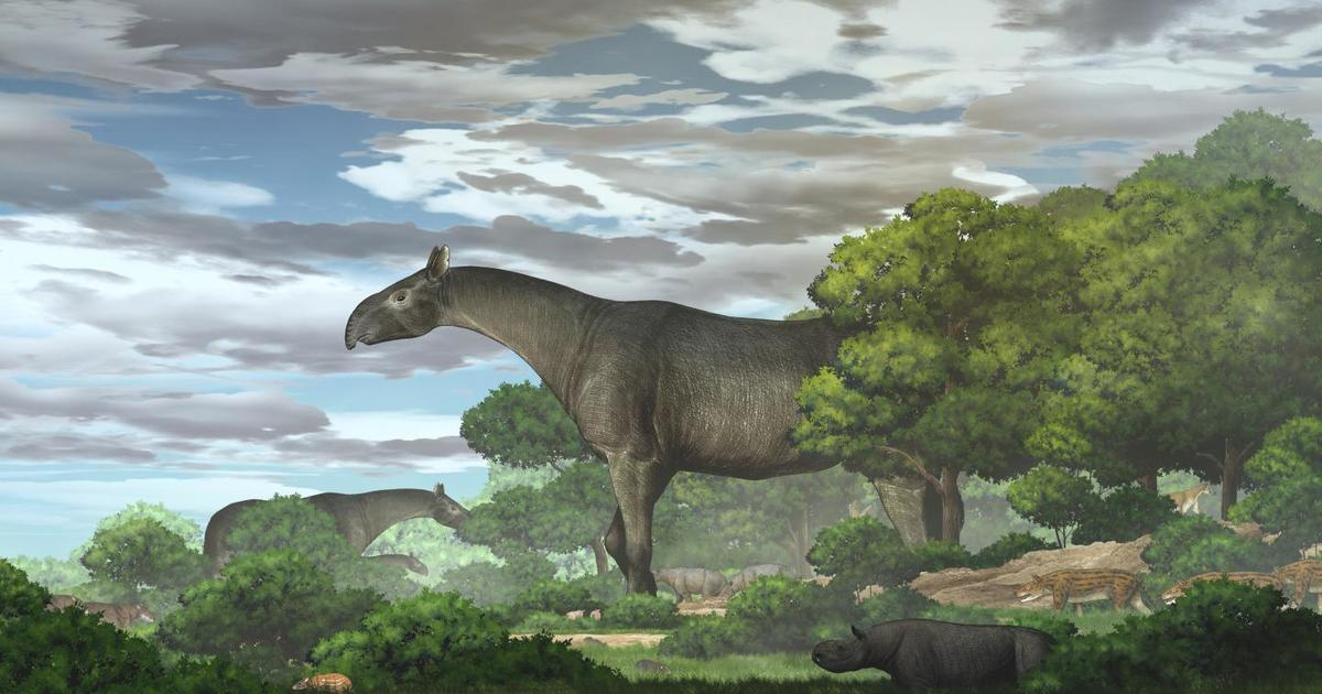 New fossils reveal one of the largest land mammals ever found — and it's a giant rhino - CBS News