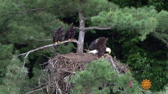 nature-eaglets-747074-640x360.jpg