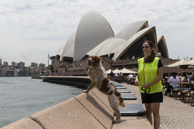 Seagull Patrol Dog Protects Diners From Losing Their Meals At Sydney Opera House