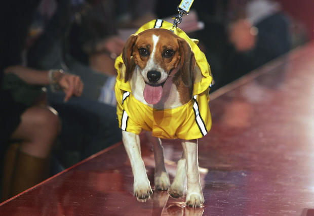 Pet-A-Porter - Fashion Show