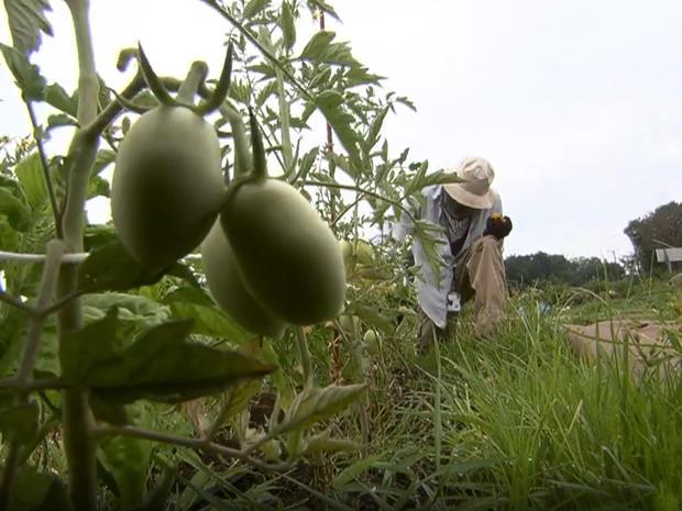 veteran-farmers-marcus-roberson-1280.jpg