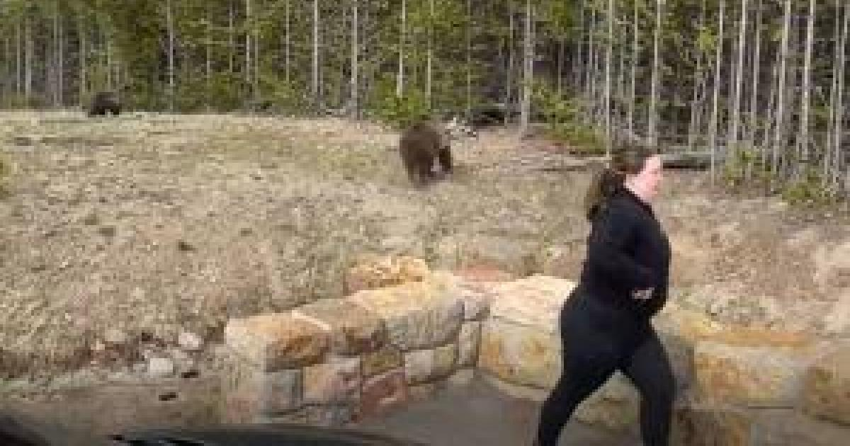 Woman faces charges after close call with grizzly bear at Yellowstone National Park is caught on video
