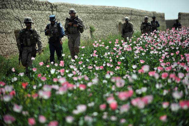 U.S. troops in Afghanistan poppy field