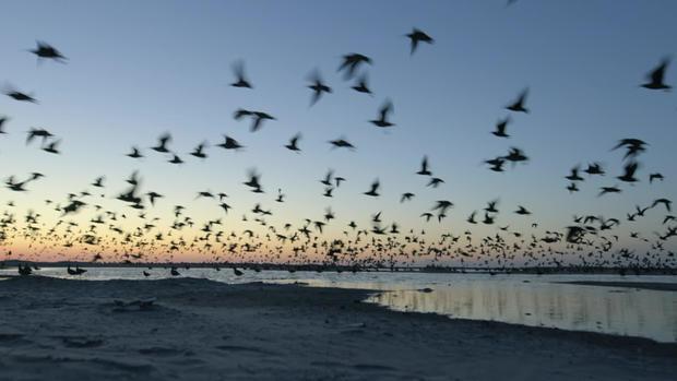 whimbrel-take-to-the-skies.jpg