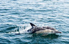 FRANCE-ENVIRONMENT-OCEAN-ANIMALS