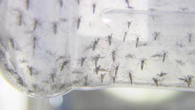 making-male-mosquitoes-1280.jpg